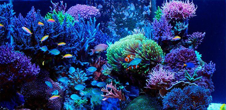 Suficiente Limpeza de aquários de água salgada IJ79